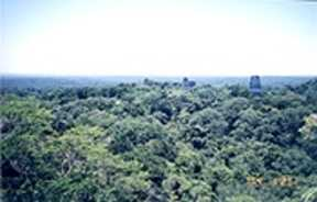 Tikal-From T 4 - Star Wars2.jpg (7712 bytes)
